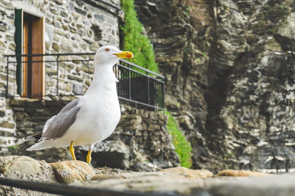 Belforte Vernazza and shore bird